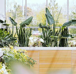 relooking piante