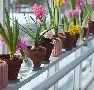 relooking vasi piante